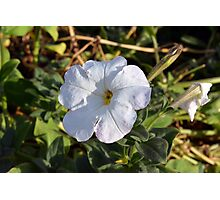White flower in the grass. Photographic Print