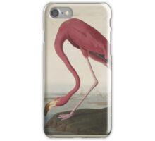 John James Audubon American Flamingo  iPhone Case/Skin