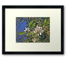 Flowers in White (Ver. 2) Framed Print