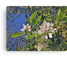Flowers in White (Ver. 2) Canvas Print