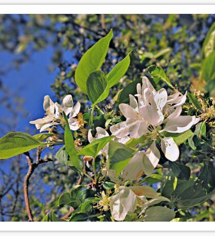 Flowers in White (Ver. 2) Sticker
