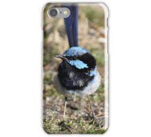 Superb Fairy Wren - Tasmania iPhone Case/Skin