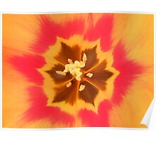 Inside of a tulip. Poster