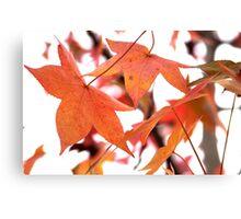 Autumn has come Canvas Print
