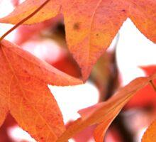 Autumn has come Sticker