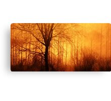 3.5.2016: Trees in the Morning Mist Canvas Print