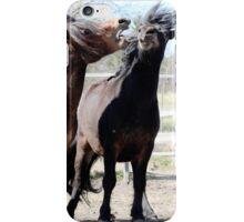 3.5.2016: Shetland Ponies II iPhone Case/Skin