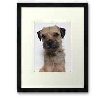 Heidi HellHound Border Terrier Dog Framed Print