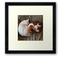 Sleeping Peacefully   Framed Print