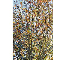 Colours of Autumn Photographic Print
