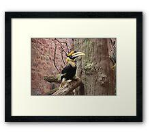 Hornbill Bird animal print  Framed Print