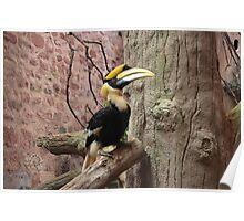 Hornbill Bird animal print  Poster