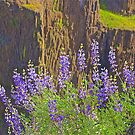 Lupines and Canyon Walls by John Butler