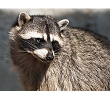 My raccoon Photographic Print