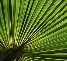 Beautiful Palm Tree leaf by Tatyana Binovskaya