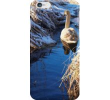 Swan On Lake 2 iPhone Case/Skin