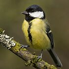 Great Tit  by M.S. Photography/Art
