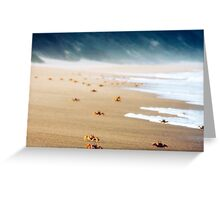Crabs on a South African Beach Greeting Card