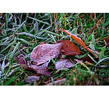 Frosty Leaf Photographic Print