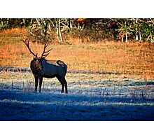 The Big Elk Photographic Print