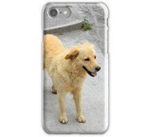 Brown Stray Dog in Cotacachi iPhone Case/Skin