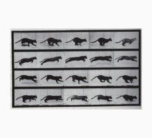 Muybridge Study - Cat Leaping Kids Tee