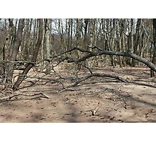 bare  trees on the flooded banks of the river Photographic Print