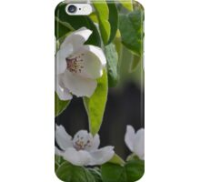 Quince in Bloom iPhone Case/Skin