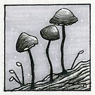 Tiny Mushrooms by Rayne Karfonta