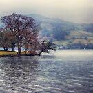 Rain at the Lake by Vicki Field