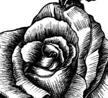 black and white tattoo rose drawing Sticker