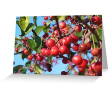 Red Barries Greeting Card