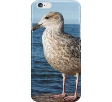 Seagull on a rock iPhone Case/Skin