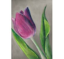 Spring blooming tulip flower original oil pastel painting Photographic Print