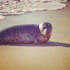 Sand, Sea and a Seal by Jayne Whitaker