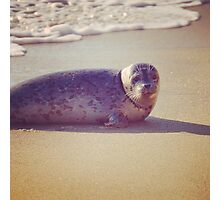 Sand, Sea and a Seal Photographic Print