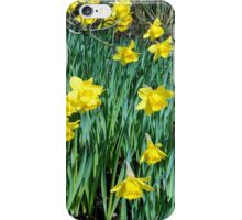 Daffodils Growing In The Woods iPhone Case/Skin