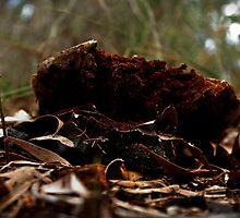Fungi on the Forest Floor by myraj