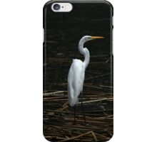 Great Egret in Water iPhone Case/Skin