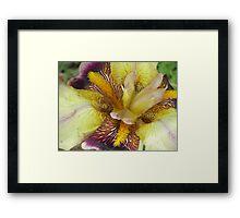 Colorful Iris #2 Framed Print