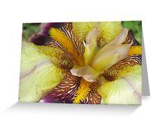Colorful Iris #2 Greeting Card