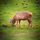 Grazing deer by Jonesyinc