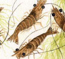 Watercolor Shrimp Sticker