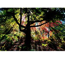 The Enchanted Wood Photographic Print