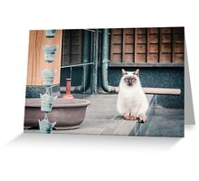 Cat, Adso, Temple Greeting Card