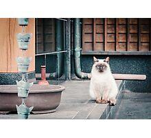 Cat, Aso, Temple Photographic Print