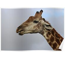 Giraffe Alert Poster