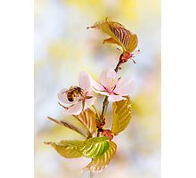 Breakfast At Sakura Photographic Print