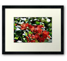 Full Bloom Of Love Framed Print