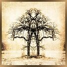 Symmetry tree by amira